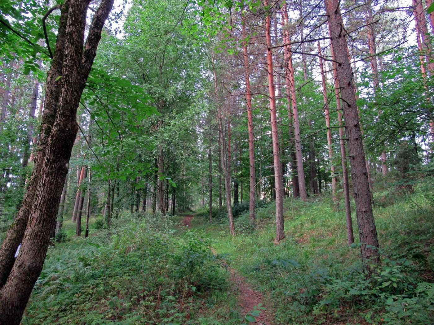 hämelinna_site-visit-4_1400